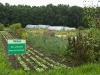 Gemüseanbau 2011